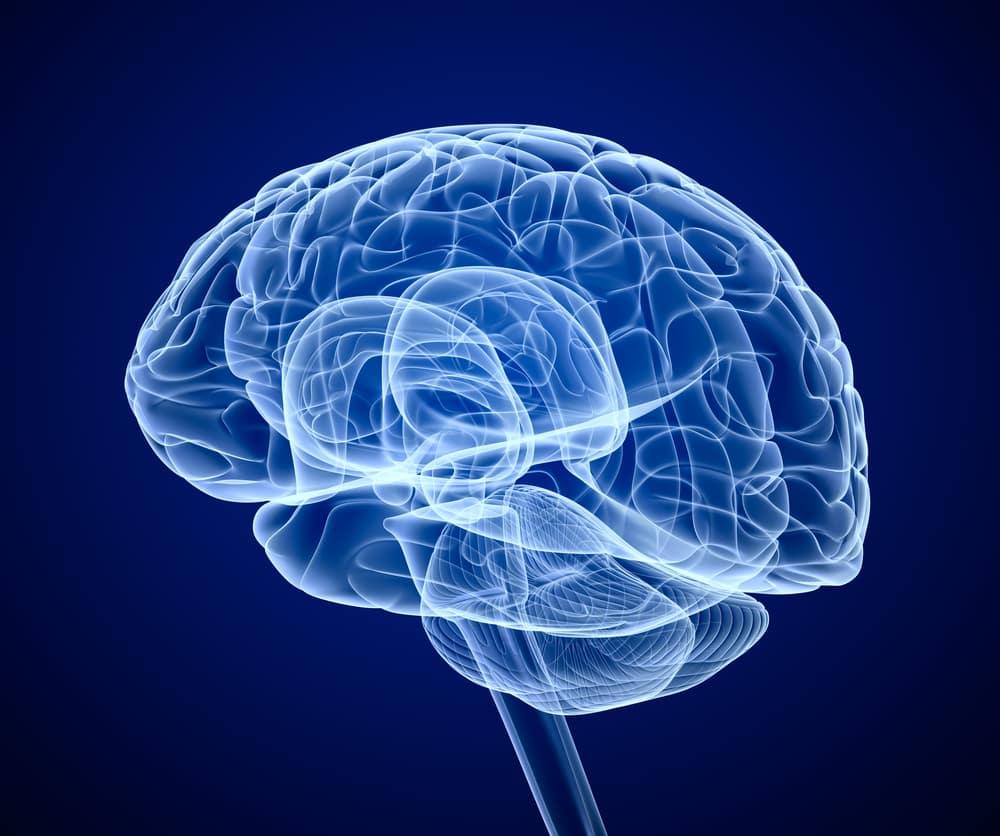Graphic image of brain